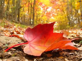 Autumn-falling-leaf